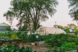 GROWING HOPE URBAN FARM