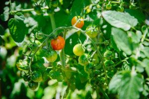 Vegetable Gardening 101 @ Virtual
